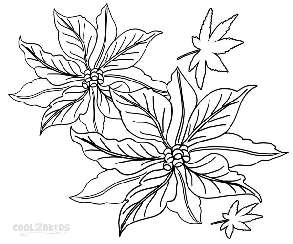 Poinsettia Coloring Page Images