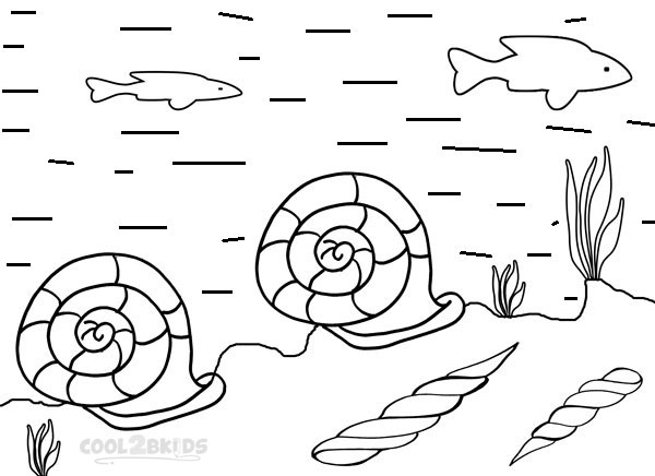 seashell coloring pages free printable