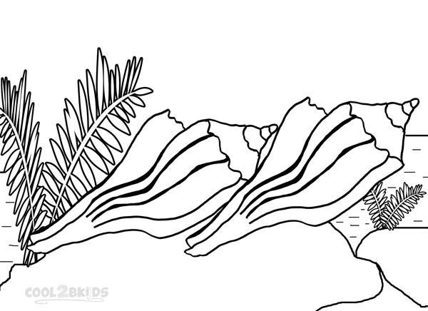 seashell coloring pages preschool - Seashell Coloring Pages Printable