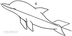 Drawing a Dolphin Step 6