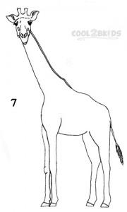 How To Draw a Giraffe Step 7