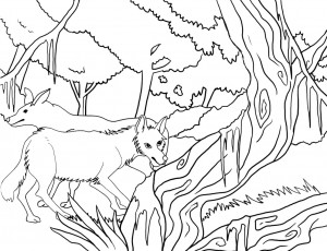 Coloring Pages of Coyote