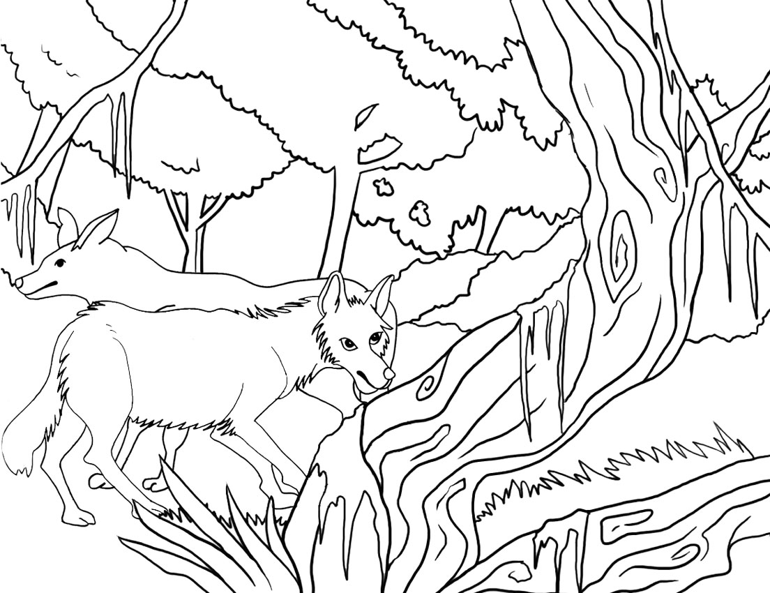 coyote pictures coloring pages - photo#28