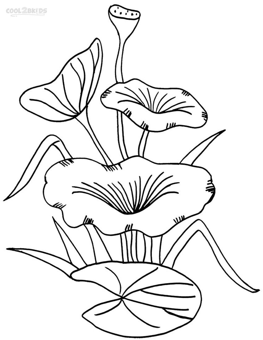 Coloring pages of lily pads