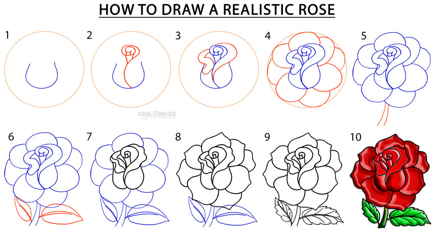 How To Draw a Realistic Rose Step by Step Pictures Cool2bKids