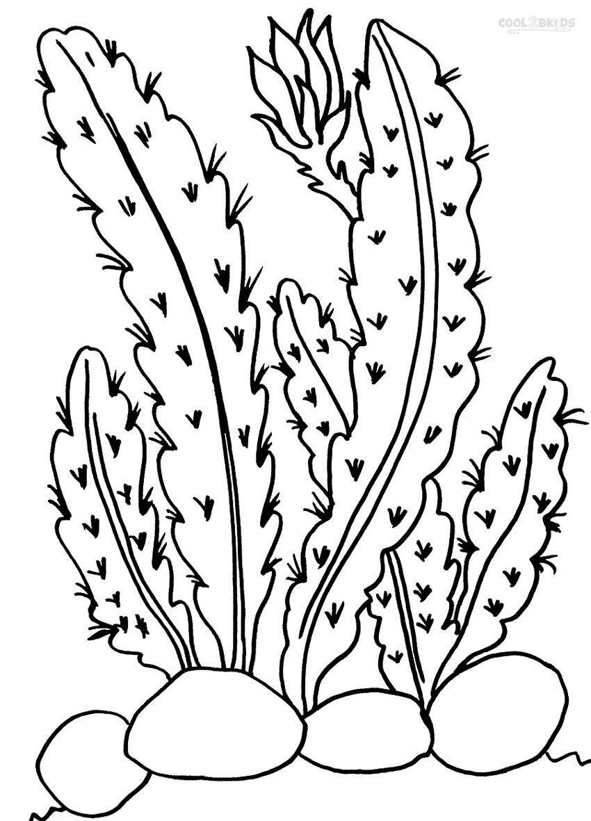 cactus coloring pages plants - photo#7