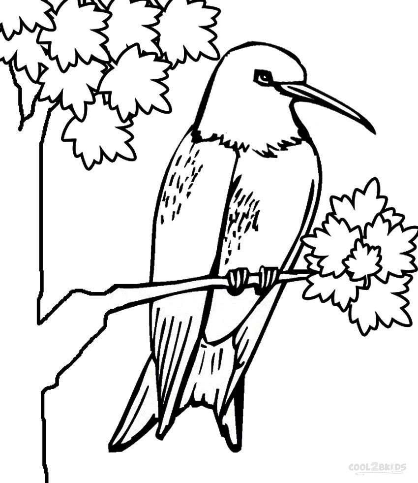 printable hummingbird coloring pages for kids cool2bkids