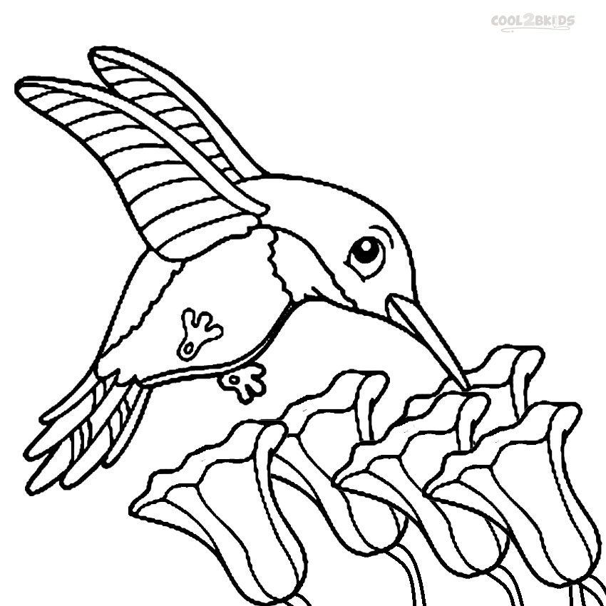 Emejing Hummingbird Coloring Sheet Pictures New Printable