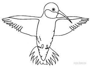 Hummingbird Printable Coloring Pages