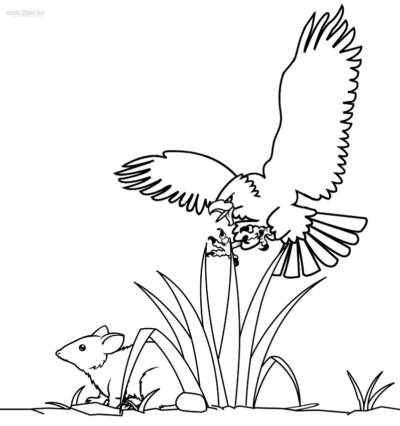 Printable Bald Eagle Coloring Pages
