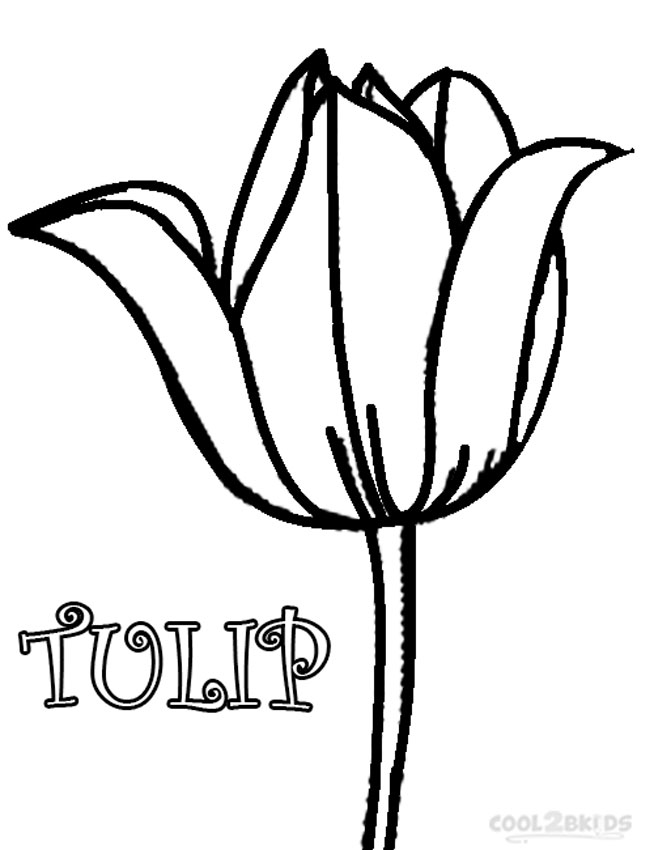 Simple tulip coloring page