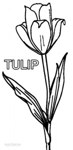 Tulip Coloring Sheets