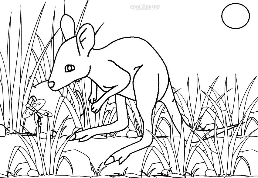Baby Kangaroo Coloring Pages