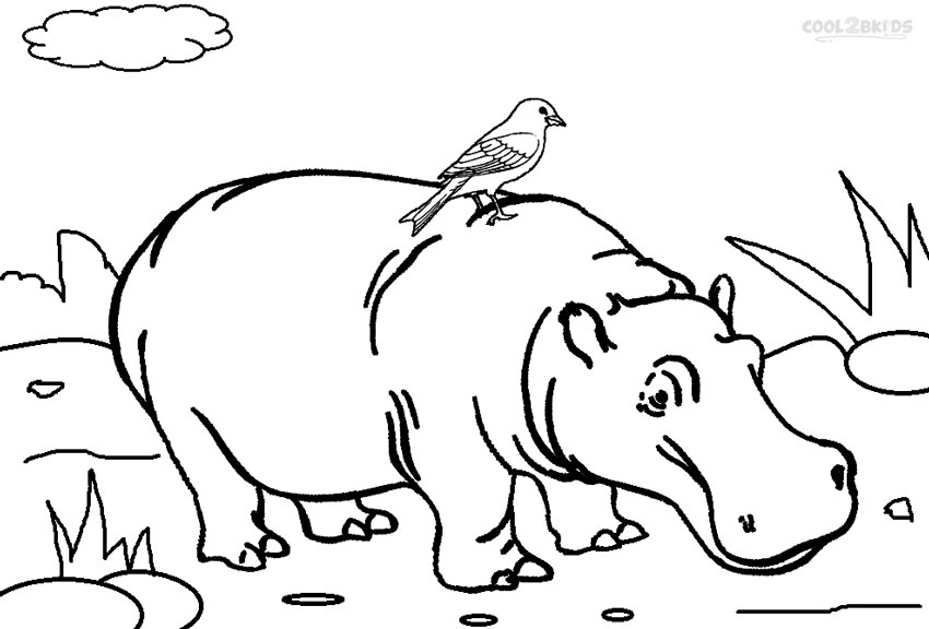 hippopotamus coloring pages to print - photo#3