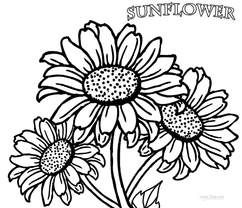 Realistic Sunflower Coloring Page