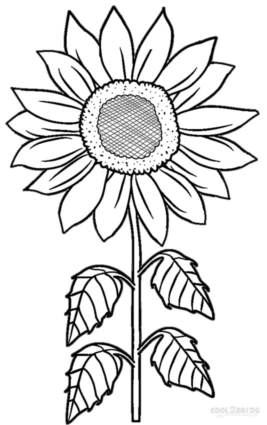 image relating to Printable Sunflower identified as Printable Sunflower Coloring Web pages For Young children Neat2bKids