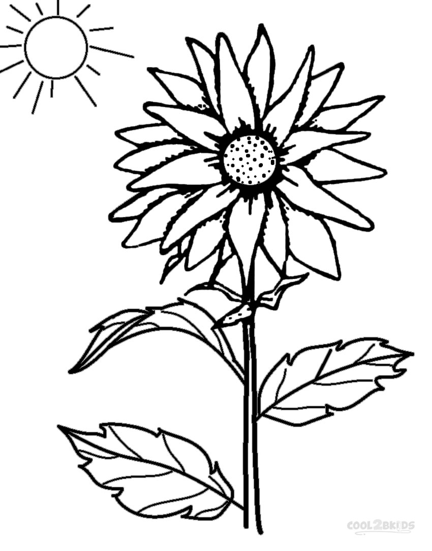 graphic about Printable Sunflower named Printable Sunflower Coloring Web pages For Small children Amazing2bKids