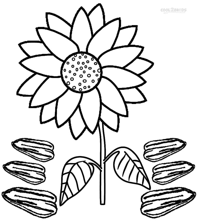 Sunflower seeds coloring pages