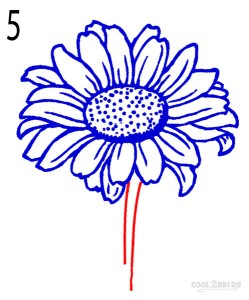How to Draw a Sunflower Step 5