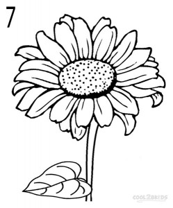 How to Draw a Sunflower Step by