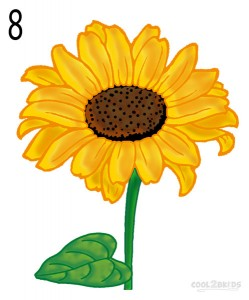 How to Draw a Sunflower Step 8