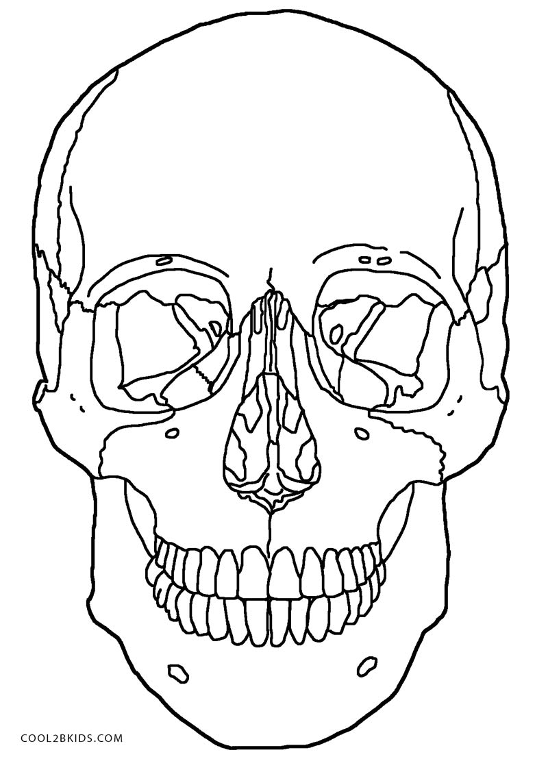 Free Coloring Pages Of Human Skull Labeling Skulls Coloring Pages