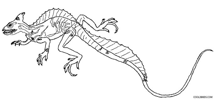 Printable Lizard Coloring Page (PDF) for Kids | 324x685