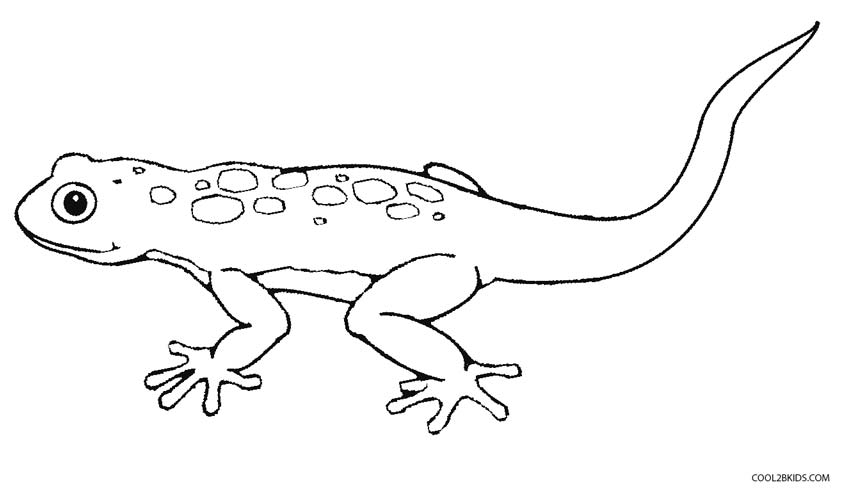 Printable Lizard Coloring Pages For