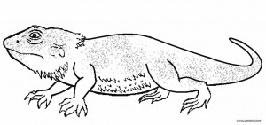Desert Lizard Coloring Pages