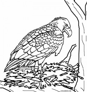 Baby Eagle Coloring Pages