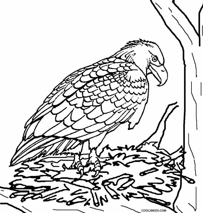 Free Coloring Pages Bird Nest