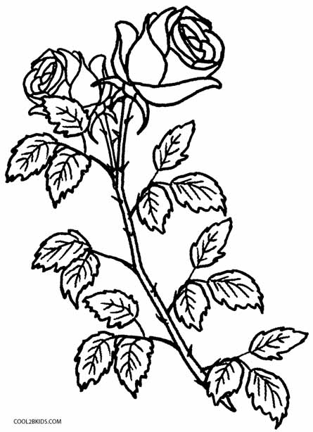 coloring book pages of roses - photo#18