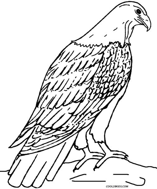 eagle coloring pages for kids - photo #23