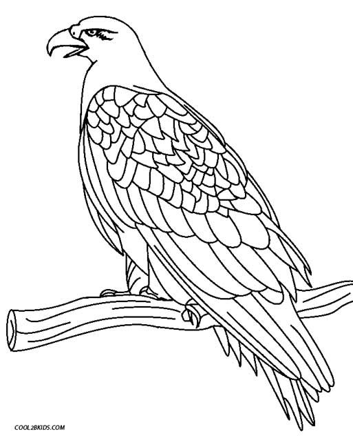 golden eagle coloring page - Coloring Page Eagle