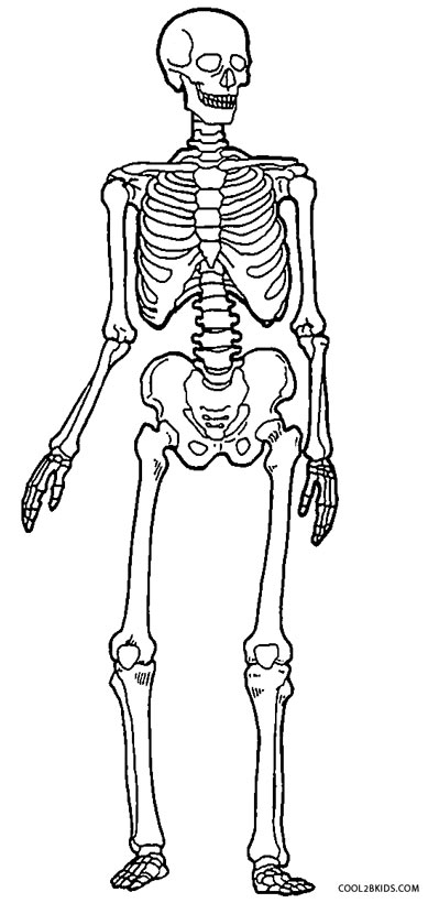 anotomical skeleton coloring pages - photo#3