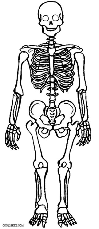anotomical skeleton coloring pages - photo#2