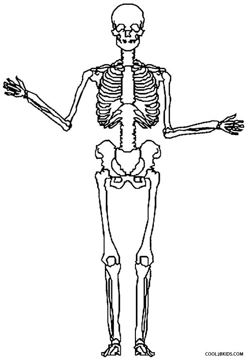 free axial skeleton coloring pages - photo#26