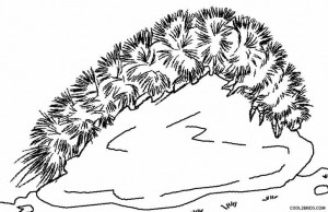 Wooly Bear Caterpillar Coloring Pages