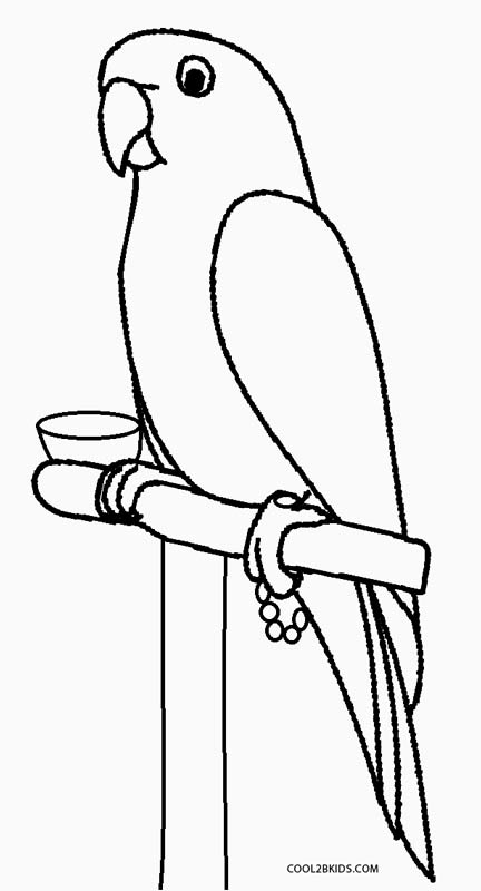 baby parrot coloring pages - Parrot Pictures To Color