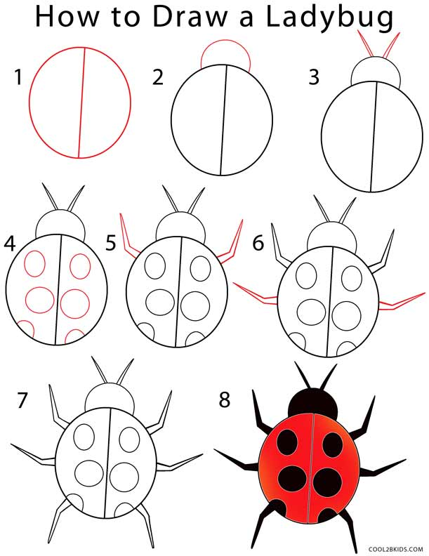 How to Draw a Ladybug (Step by Step Pictures) | Cool2bKids