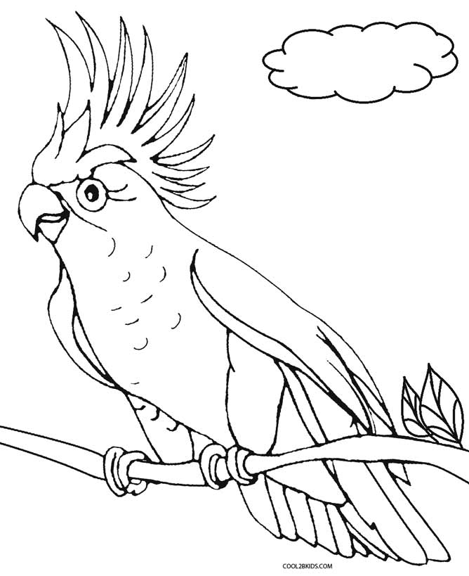 Parrot On Tree Parrot Coloring Pages