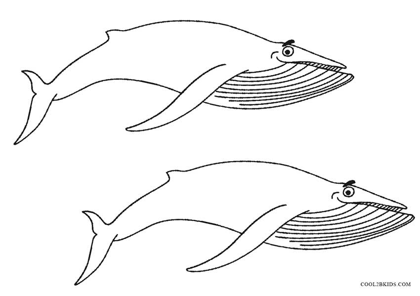 - Printable Whale Coloring Pages For Kids