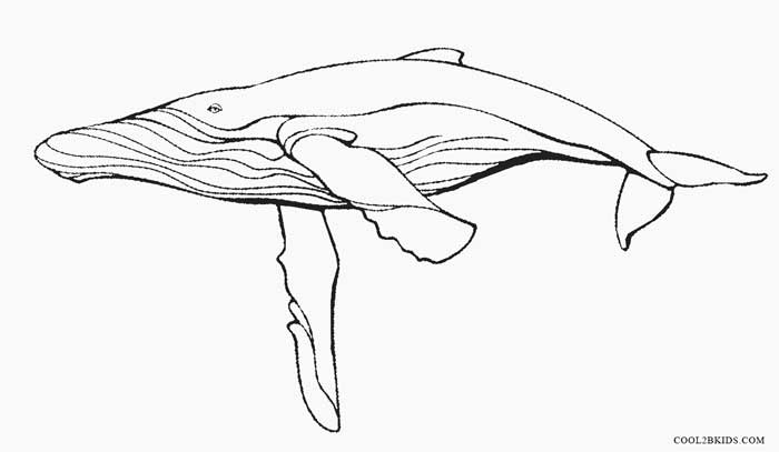 humpback whale coloring pages-#11