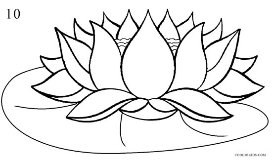 how to draw lotus flower  step by step pictures