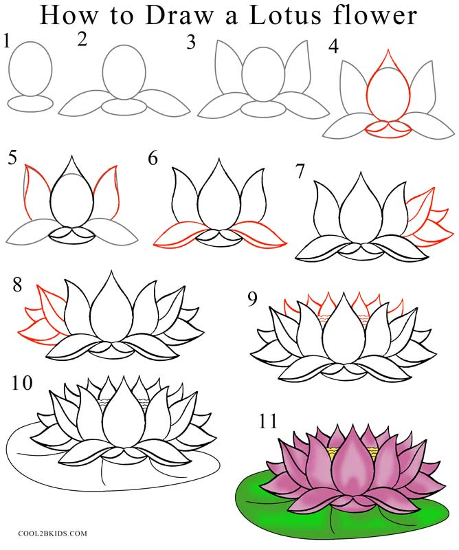 Drawing Lines Year : How to draw lotus flower step by pictures cool bkids