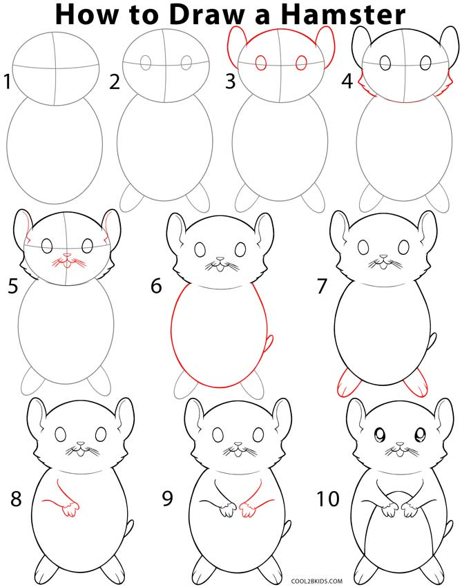 how to draw a hamster step by step pictures cool2bkids