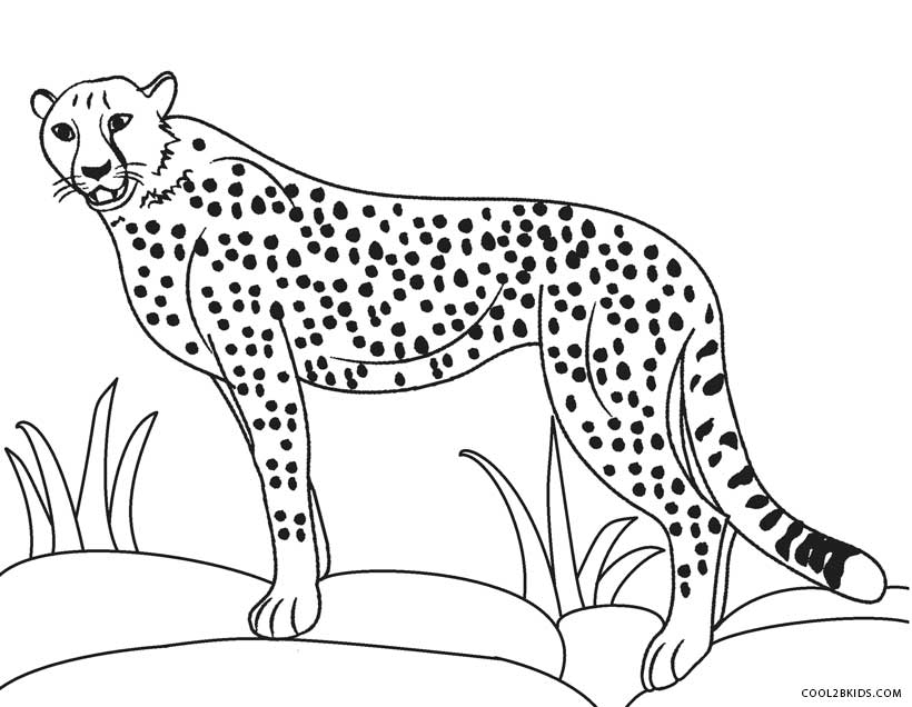 coloring pages cheetah - photo#7