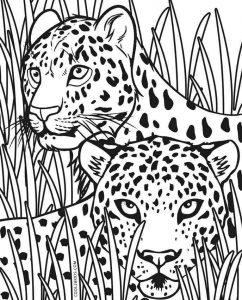 Cheetah Face Coloring Page