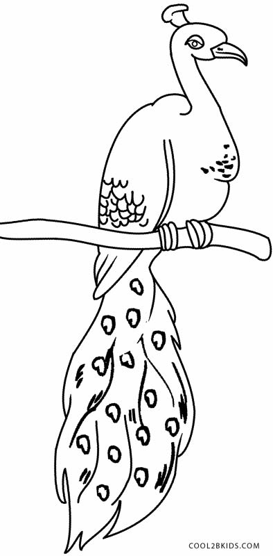 coloring pages peacock - Peacock Coloring Pages