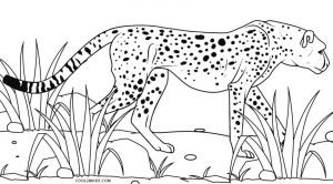 Coloring Pages of Cheetahs